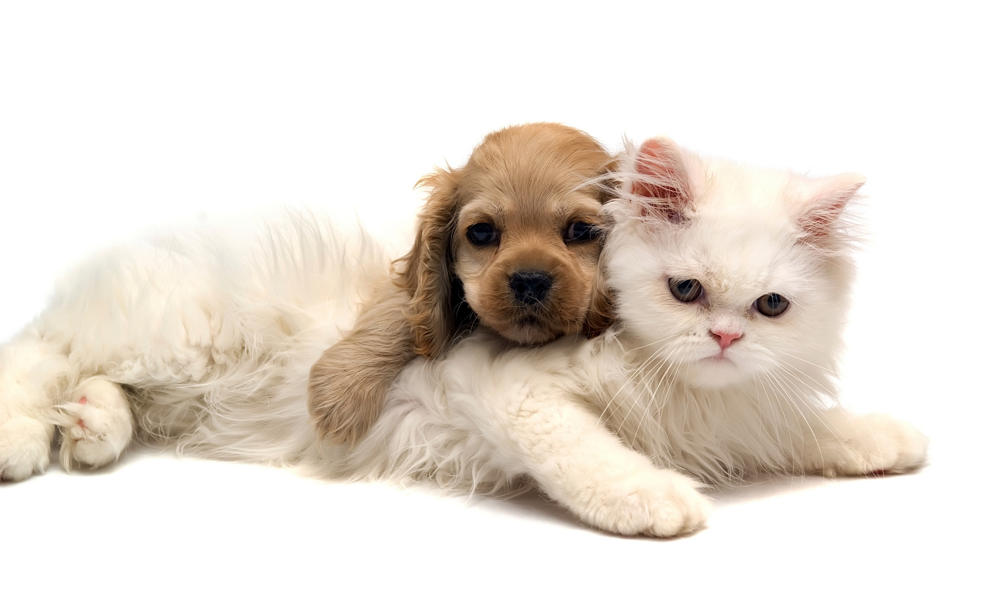 Cute-Cat-and-Dog-HD-Wallpapers