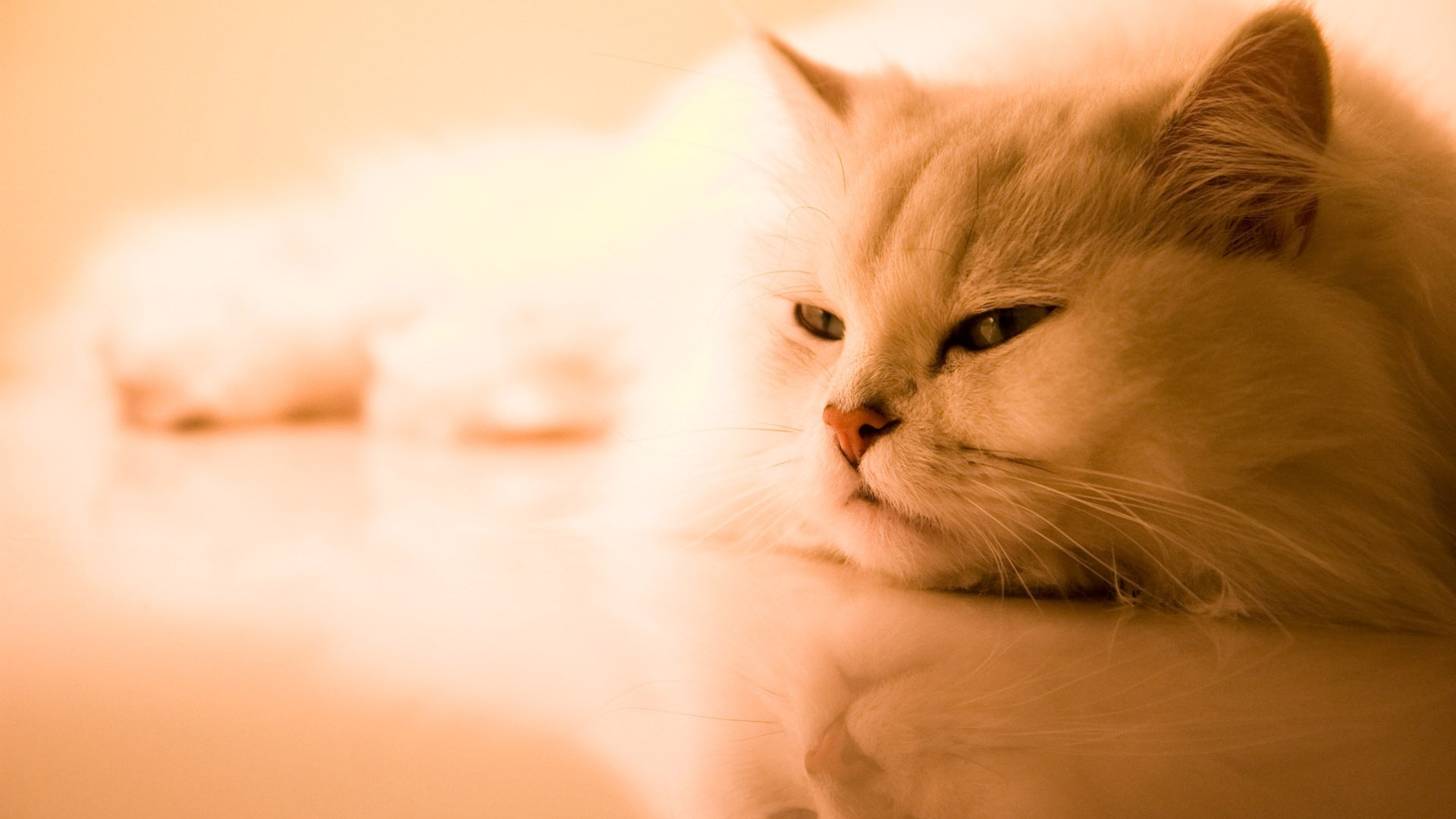 Lonely-Cat-HD-Wallpaper