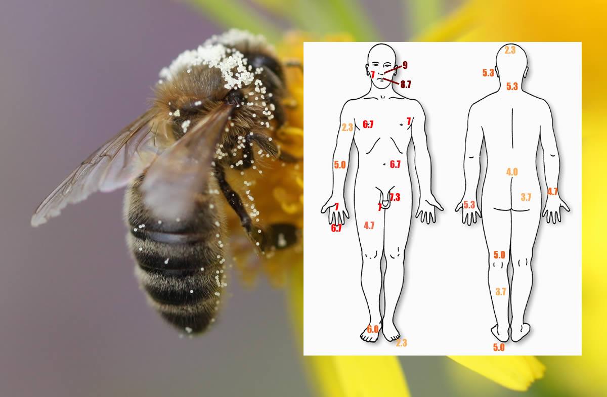 honeybee-sting2