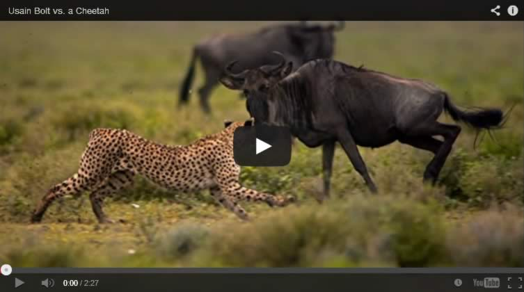 usain-bolt-cheetah