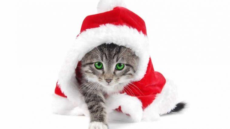 cute kitten in a santa hat