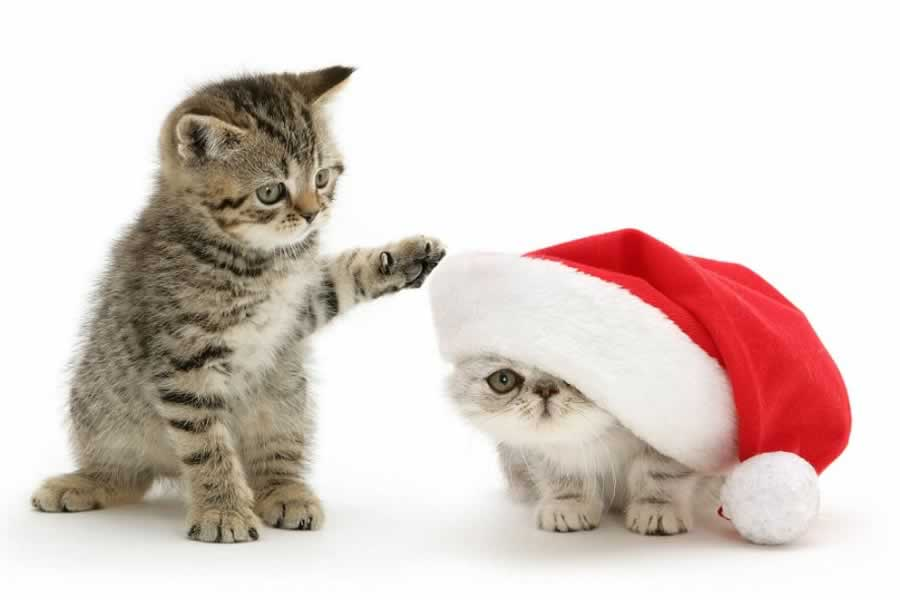 cute-animals-in-santa-suits21