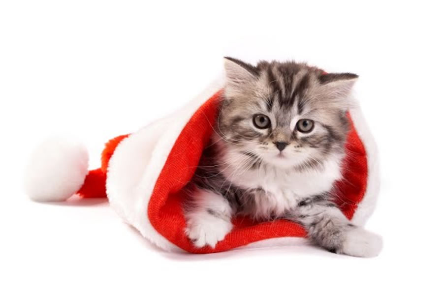 cute-animals-in-santa-suits27