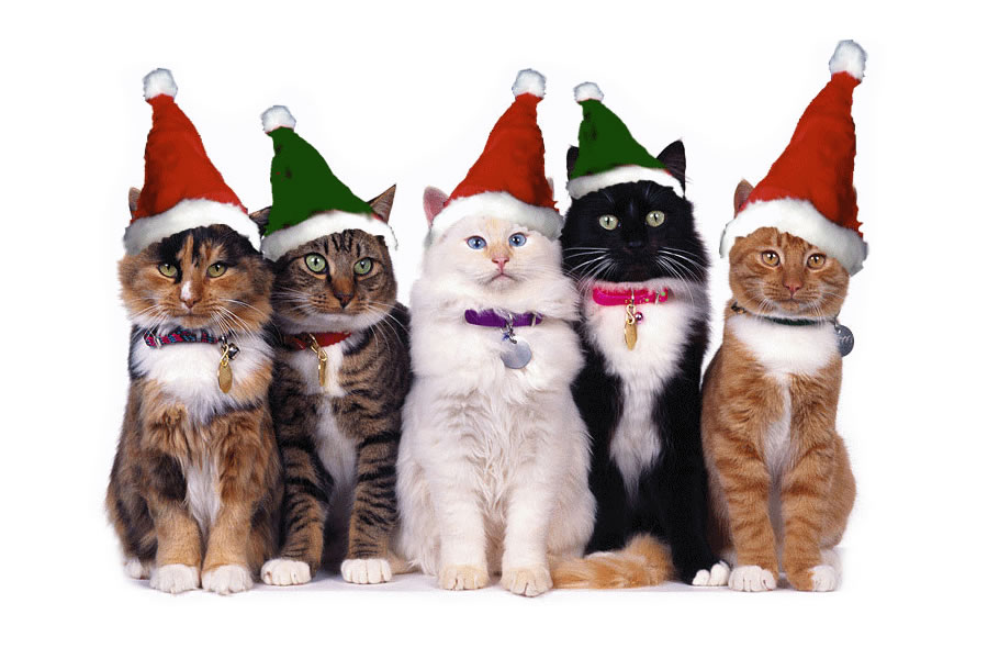 Quartet of fluffy cats in Santa hats