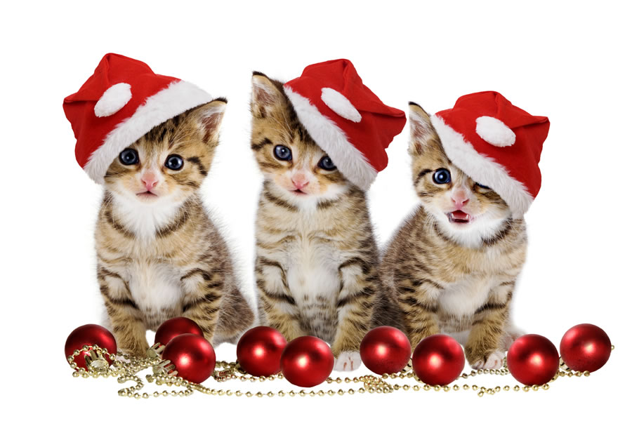 cute-animals-in-santa-suits8