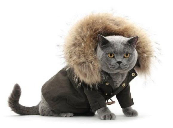 cats with style